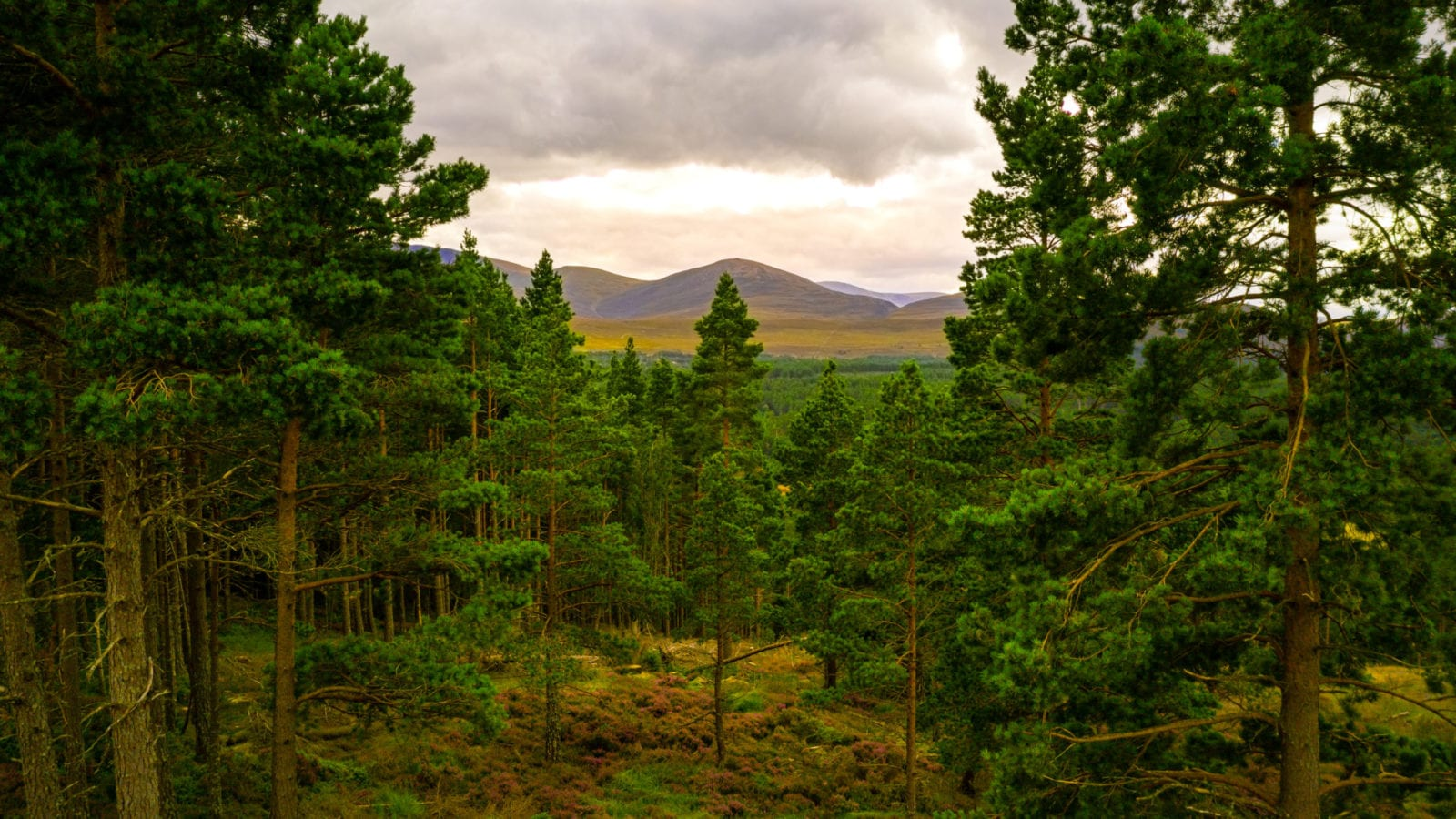 Beautiful,View,Over,The,Cairngorms,National,Park,On,The,Way